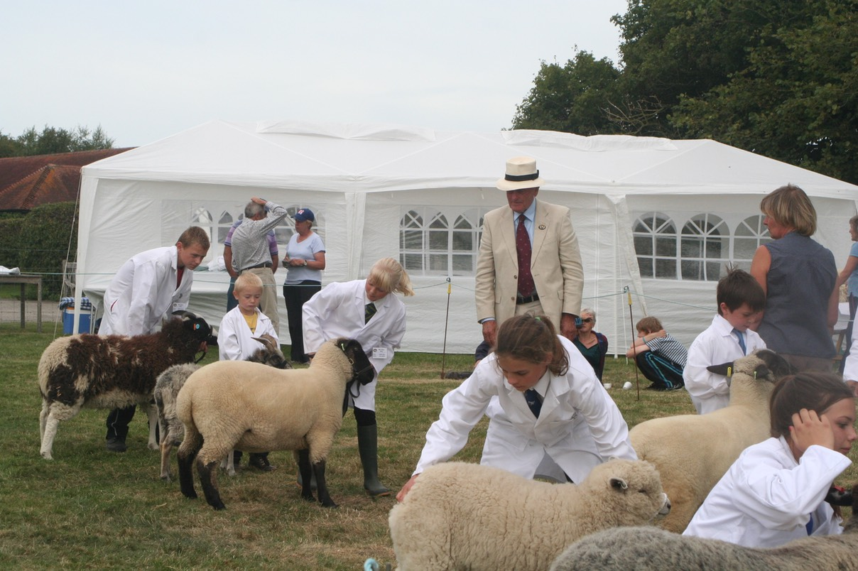Young handlers holding their sheep for the judge.